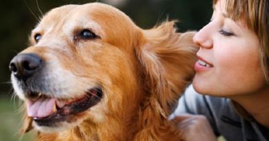 دراسة: الكلاب قادرة على استشعار أحاسيس الإنسان