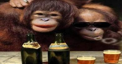 القرد السكران