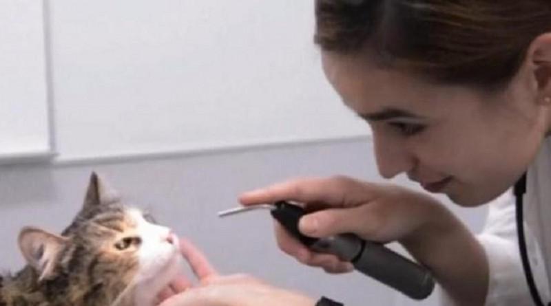 باحثون يدرسون تطبيق علاج للقطط على البشر