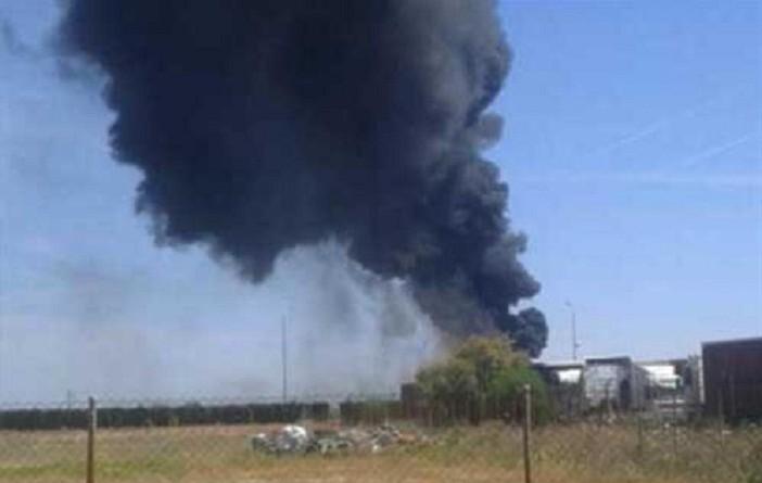إسبانيا.. نسر يتسبب في سقوط طائرة