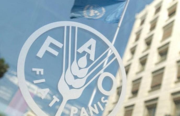 فاو: ارتفاع أسعار الغذاء العالمية في مارس