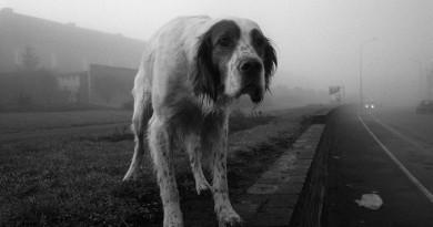 الكلاب تملك مشاعر وأحاسيس وعواطف الإنسان