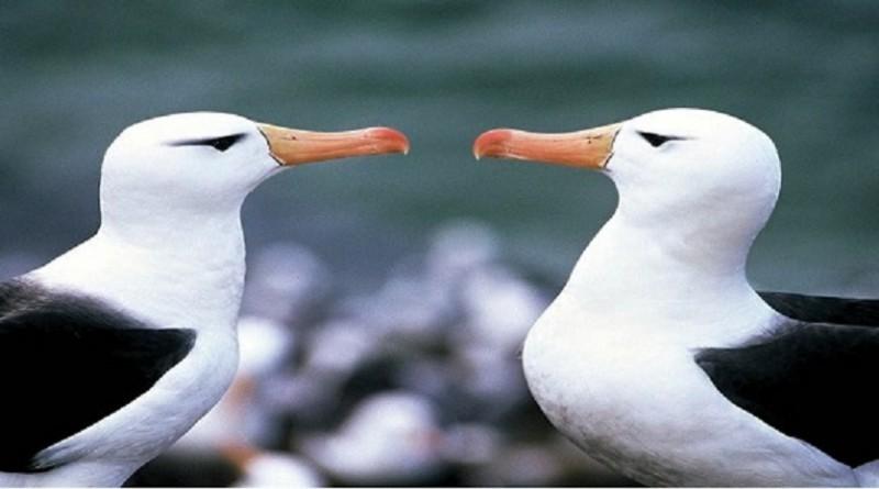 أستراليا تضيف 49 نوعًا إلى قائمة النباتات والحيوانات المعرضة للخطر