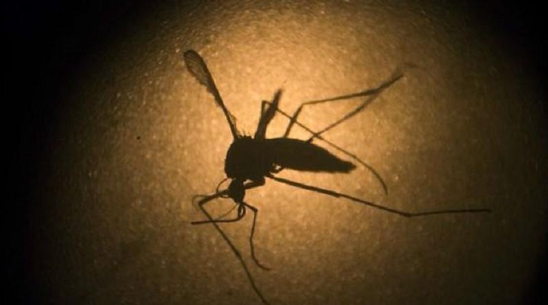 منظمة الصحة : الفشل في مكافحة البعوض سبب انتشار زيكا