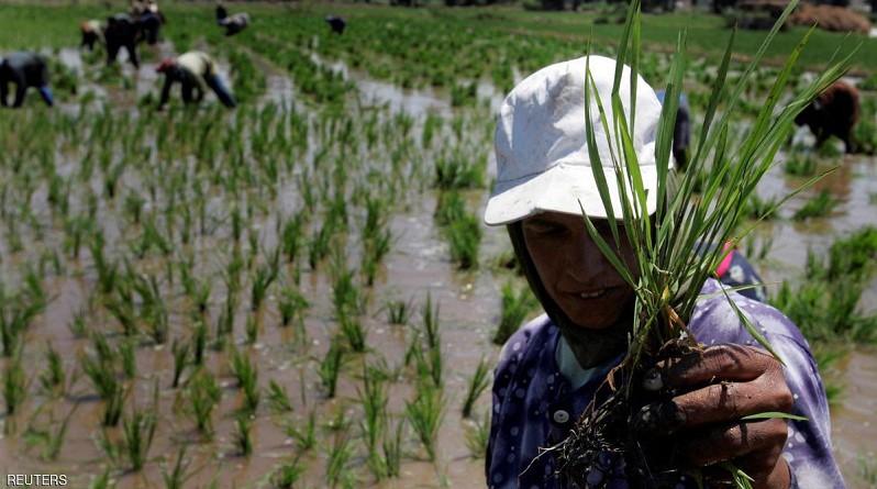مصر تستعد لرمضان باستيراد 80 ألف طن من الأرز
