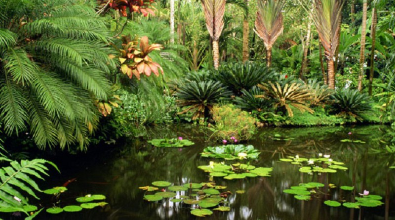 خمس أنواع النباتات معرضة للخطر مع توسع الزراعة وقطع الأخشاب