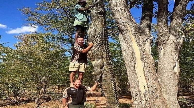 تداول صورة تمساح ضخم بطول ثلاثة رجال