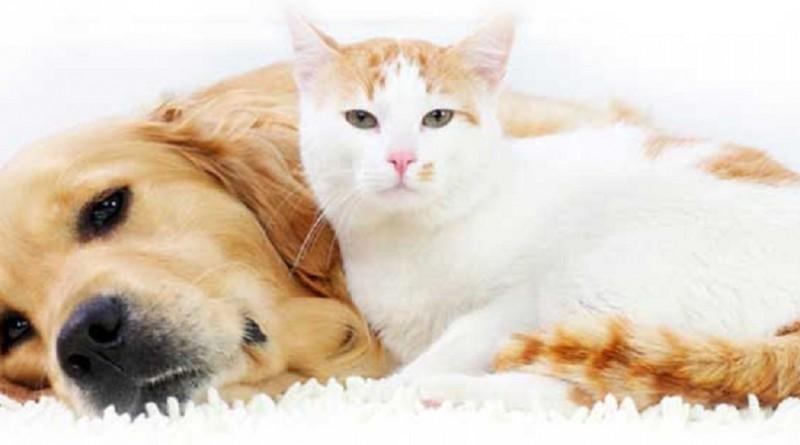"""تقليل خطر السكتة الدماغية بـ""""قطة"""" أو """"كلب"""""""