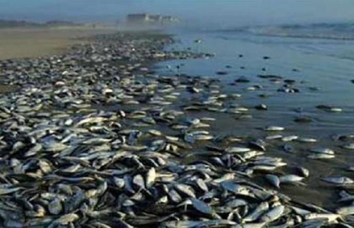 طفيليات قاتلة للأسماك تجبر السلطات على إغلاق نهر يلوستون