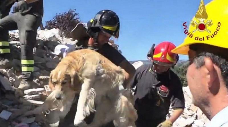 بالفيديو: بعد مرور 10 أيام على زلزال إيطاليا.. إنقاذ كلب