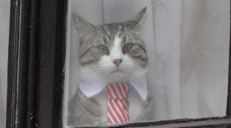 """قطة جوليان أسانج تطل للصحفيين من نافذة سفارة الإكوادور """"باللباس الرسمي"""""""