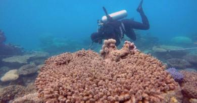العلماء يسجلون أسوأ تكلس في الحاجز المرجاني العظيم حتى الآن