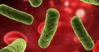 دراسة: ميكروبات الأمعاء ربما تساعد على اكتساب الوزن ثانية بعد خسارته