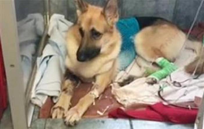 6000 دولار لعلاج كلب أنقذ طفلة من لدغة أفعى قاتلة