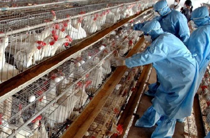 بؤرتان جديدتان لإنفلونزا الطيور في بريطانيا