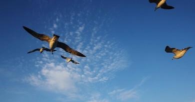 كيف تقاوم الطيور الصعق على أسلاك الكهرباء