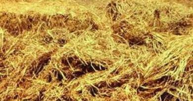 خبيرة بيئية: مخلفات المحاصيل الزراعية ثروة تقدر بالمليارات