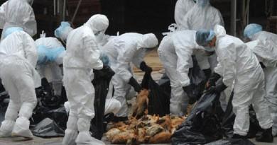 الكاميرون تؤكد ظهور أول إصابة بإنفلونزا الطيور