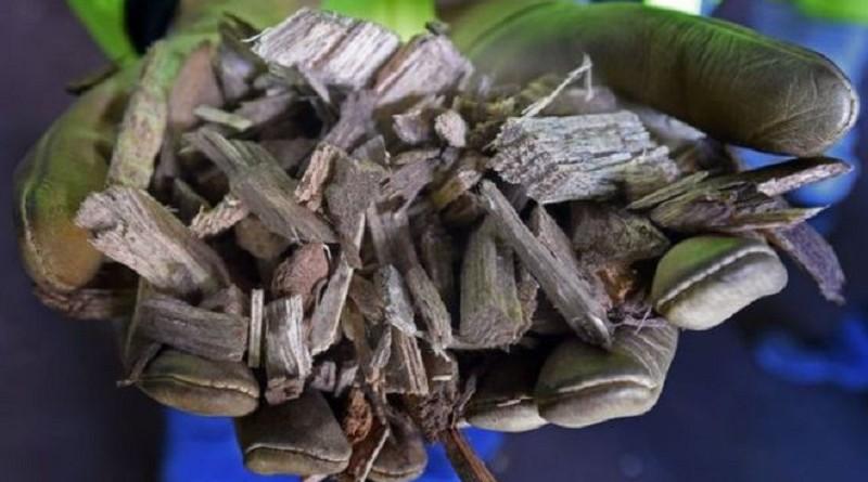 دراسة: إنتاج الطاقة من الخشب كارثي على البيئة والتغير المناخي