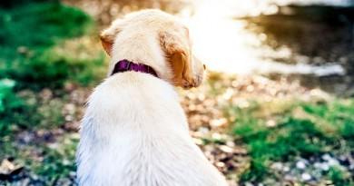 كلبة تنقذ حياة صاحبها
