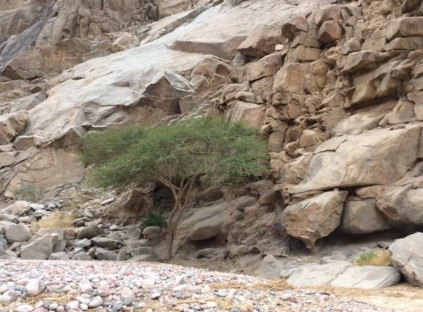 تعرف على أعشاب سيناء التي تشفي العديد من الأمراض
