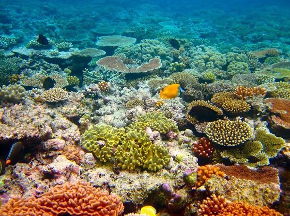 علماء: الحاجز المرجاني العظيم لن يعود لسابق عهده إطلاقا