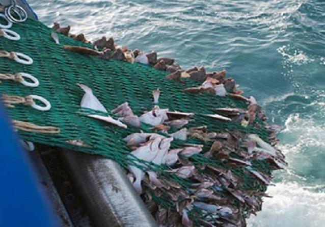 اتفاقية مصرية موريتانية في مجال الأسماك