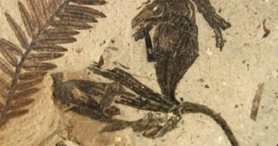 حفريات عمرها 1.6 مليار سنة ربما تكون أقدم نباتات معروفة