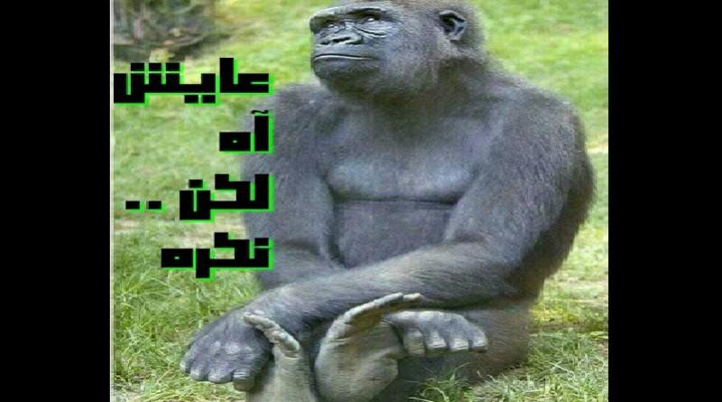 رباعيات محمد النقلى … نكره