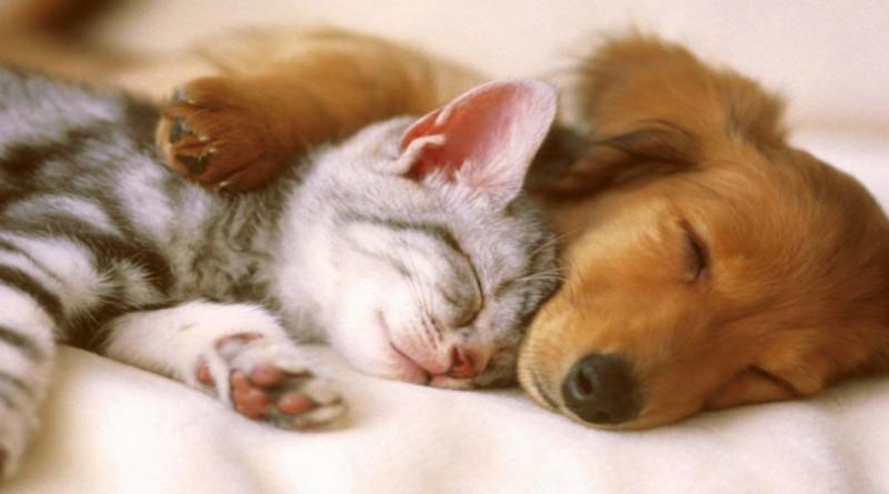 """علاقة صداقة بين كلب وقطة يشهدها حي """"بورمالي"""" غرب تركيا"""