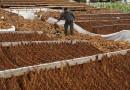 الصحة العالمية تحذر من العواقب البيئية لزراعة التبغ