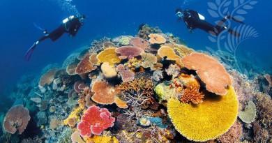 اليونسكو: على أستراليا فعل المزيد لحماية الحاجز المرجاني