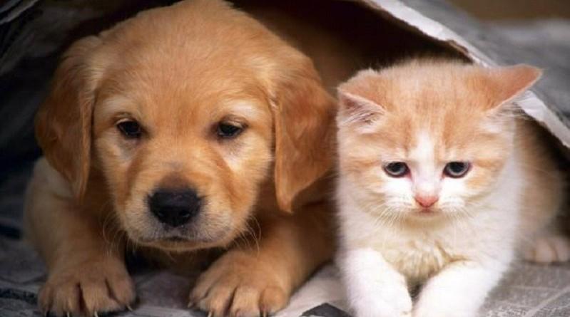 القطط والكلاب في أمريكا تستهلك خمس كميات الطعام التي يحتاجها سكان البلاد!