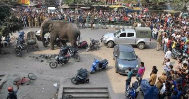 فيل يقتل 15 شخصًا في الهند