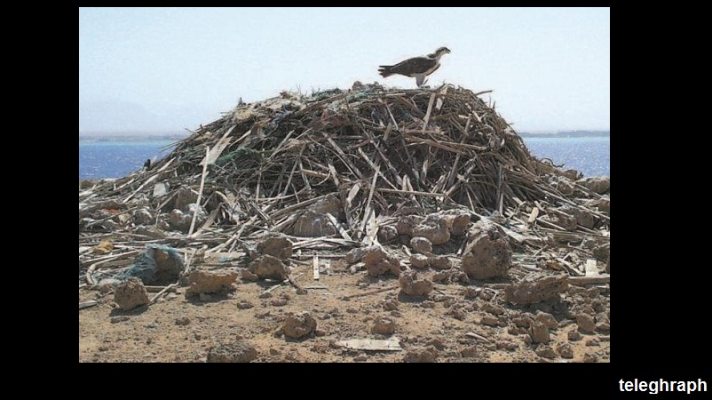جزيرة أبو منقار محطة استراحة وتوالد للطيور المهاجرة
