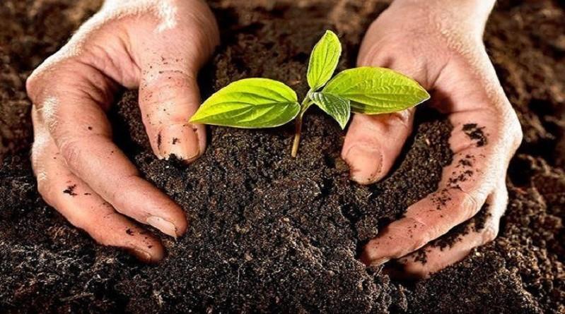 ثورة في المجال الزراعي.. تطوير تربة بمزايا مدهشة!