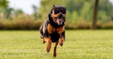 الكلاب تكشف الجرائم الإلكترونية في بريطانيا