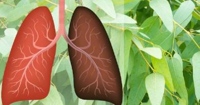 تعرف على أفضل 8 أعشاب لصحة الرئتين