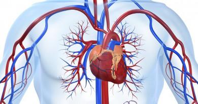 ما هي أمراض القلب وكيف تؤثر على الجسم؟