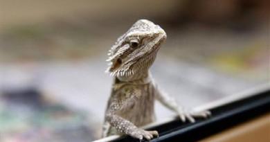 دراسة: 75% من الزواحف والحيوانات الأليفة تموت خلال أول عام من عمرها