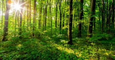ماذا يحدث للدماغ عند العيش بالقرب من الغابات؟