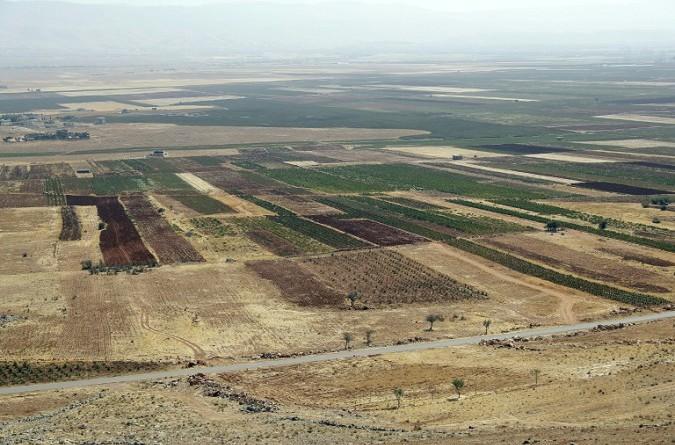 في شرق لبنان كروم العنب زراعة بديلة عن الحشيشة