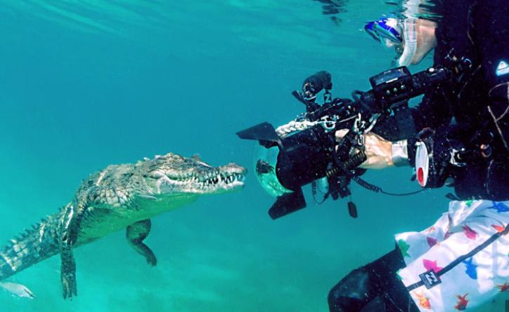 بالصور: مغامر جريء يتحدى الخوف ويسبح مع تمساح!