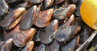 """دراسة: """"بلح البحر"""" يتعرض لتلوث المحيطات"""
