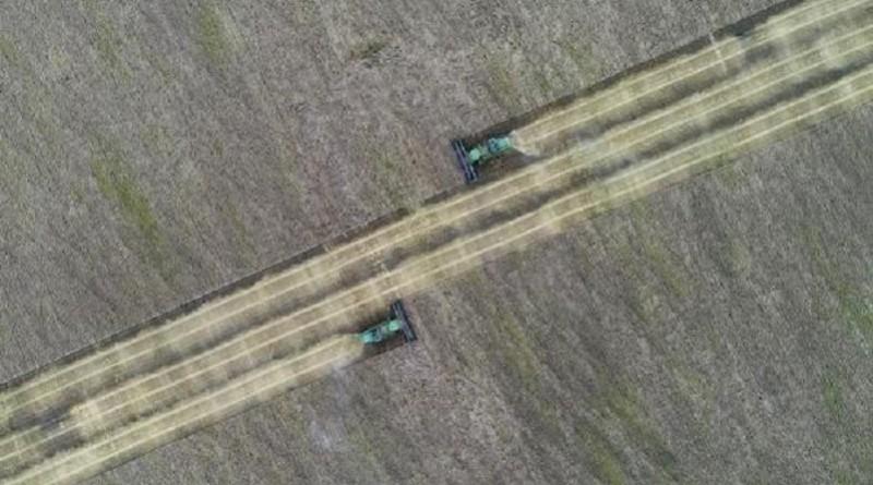 استقرار سعر القمح الروسي مع توافر مخزونات كبيرة