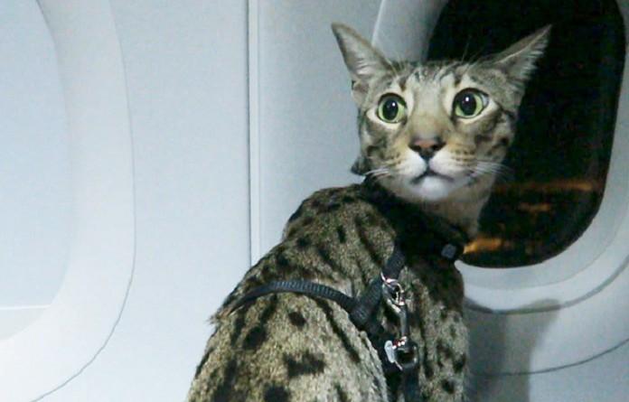 قطة داخل قمرة قيادة طائرة باكستانية تثير حالة الاستنفار الأمني