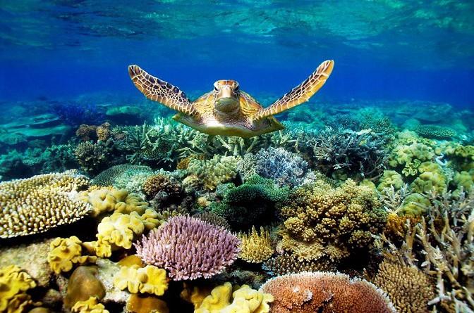 دراسة: ارتفاع حرارة المحيطات يجعل الإناث أغلبية بين سلاحف الحاجز المرجاني العظيم