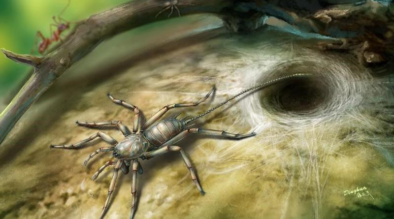 علماء يكتشفون نوعا قديما من العناكب بذيل