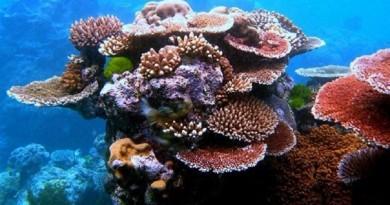 دراسة: زيادة حموضة المحيطات تهدد الشعاب المرجانية بالتحلل