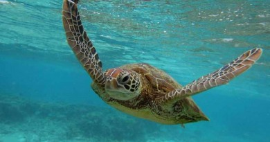 حقائق مذهلة عن السلاحف البحرية